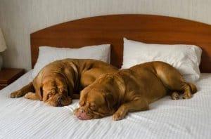 כיצד לבחור ריהוט לחדר שינה