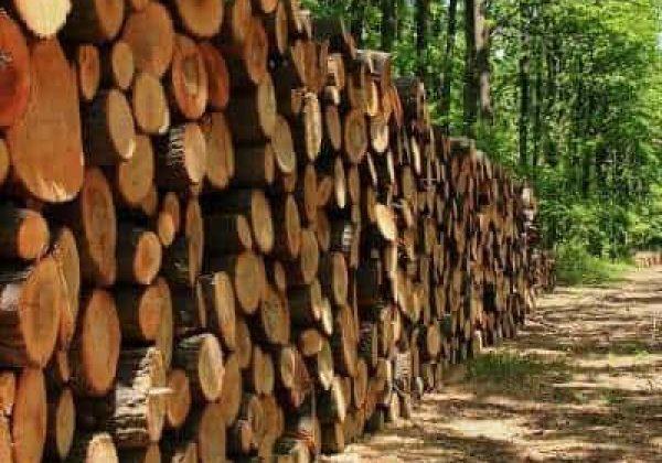עץ – אולי לא מה שחשבת!